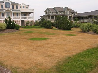 Even fancy neighborhoods can have nice beige lawns.