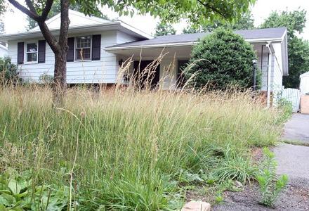 overgrown_lawn