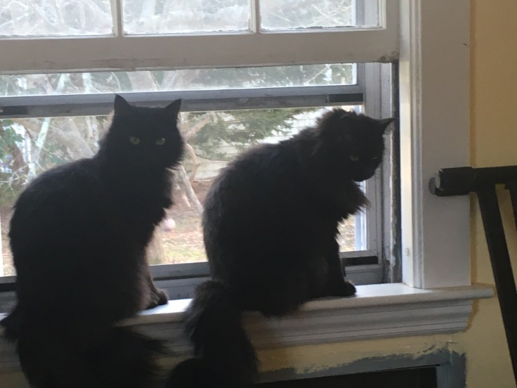 Cats in a window.jpg