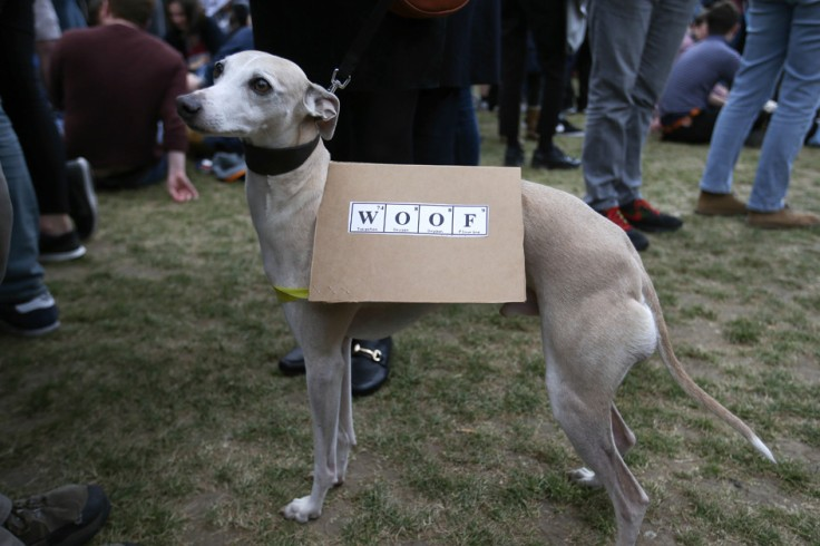 dog protester