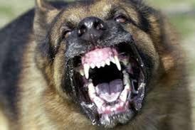 rabid dog
